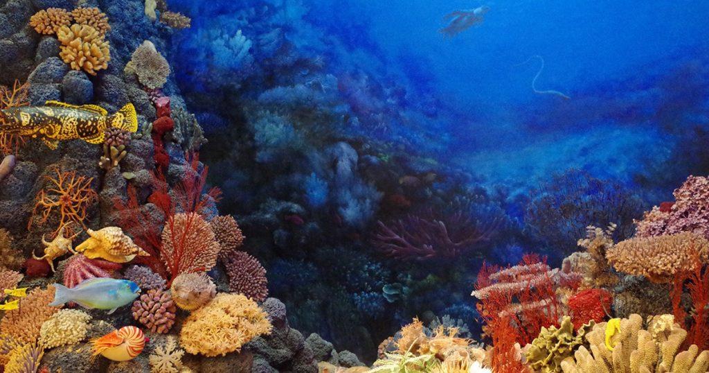 11 ans de mariage, c'est le corail